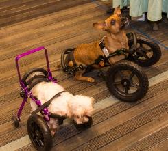 2016-dogs-on-wheels-2