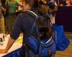 2016-petunia-in-backpack